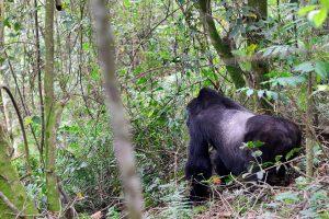 Uganda Safaris and tours - Uganda Safari Holidays - Uganda Gorilla Safaris