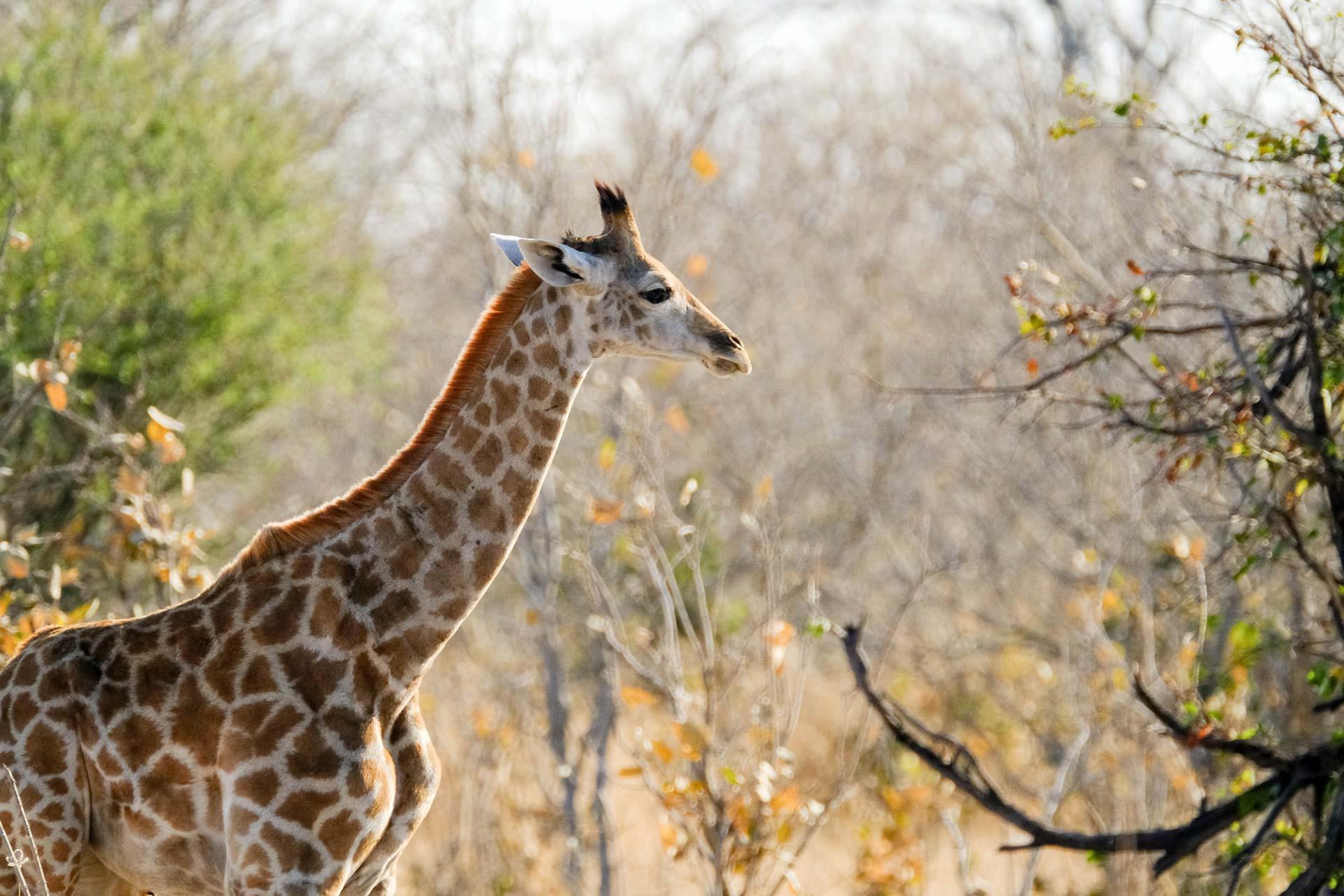 Africa Safaris - Scenic Trails Uganda Safaris