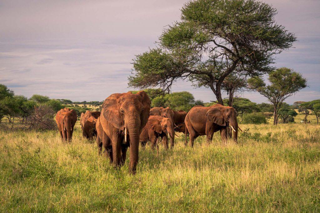 Amboseli National Park- Africa Savannah Safaris - Scenic Trails Uganda Safaris