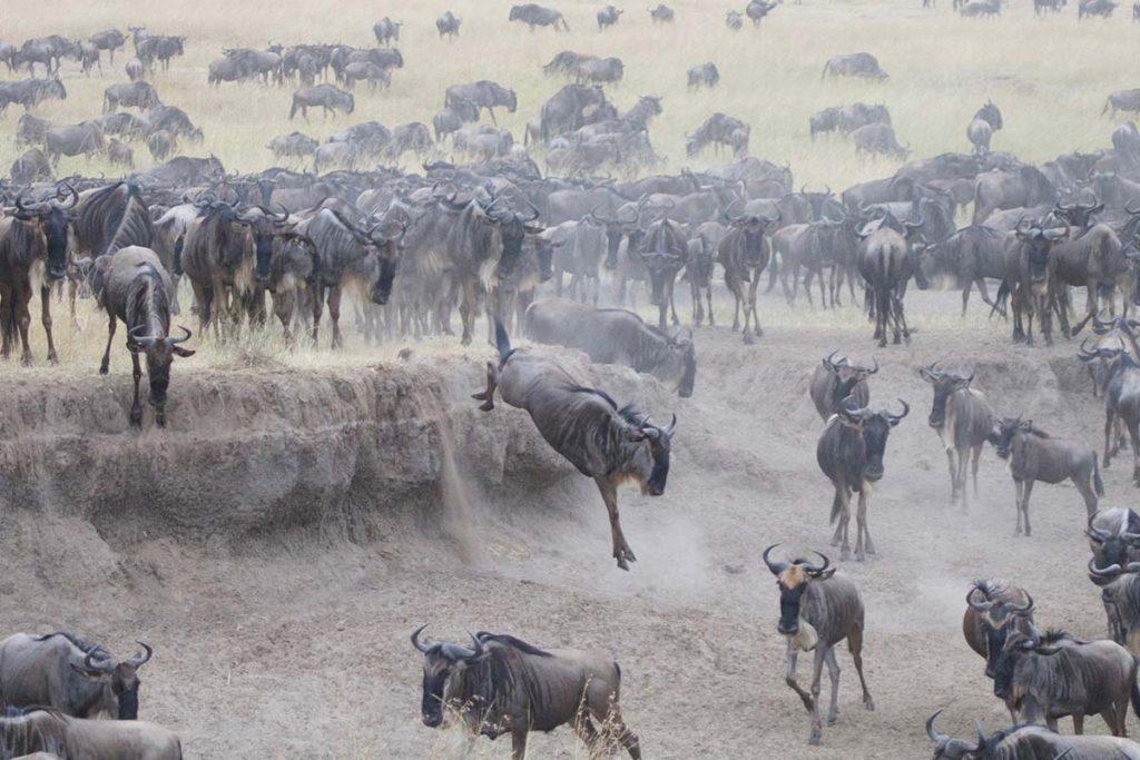 Uganda Gorillas & Masai Mara Overland Safari