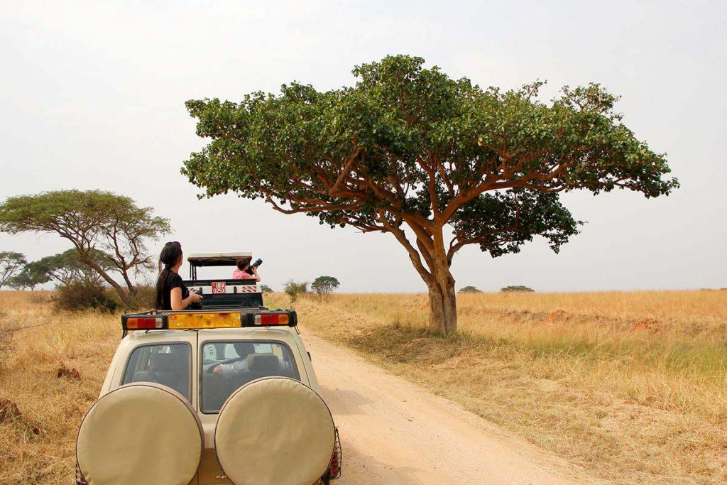 Game Drive Safaris in Uganda