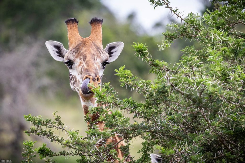 Rwanda Savannah Wildlife Safaris