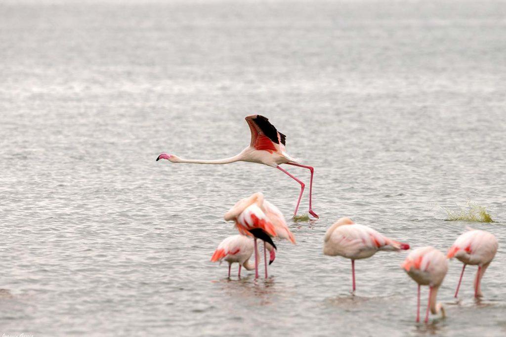 Lake Nakuru-Flamigos