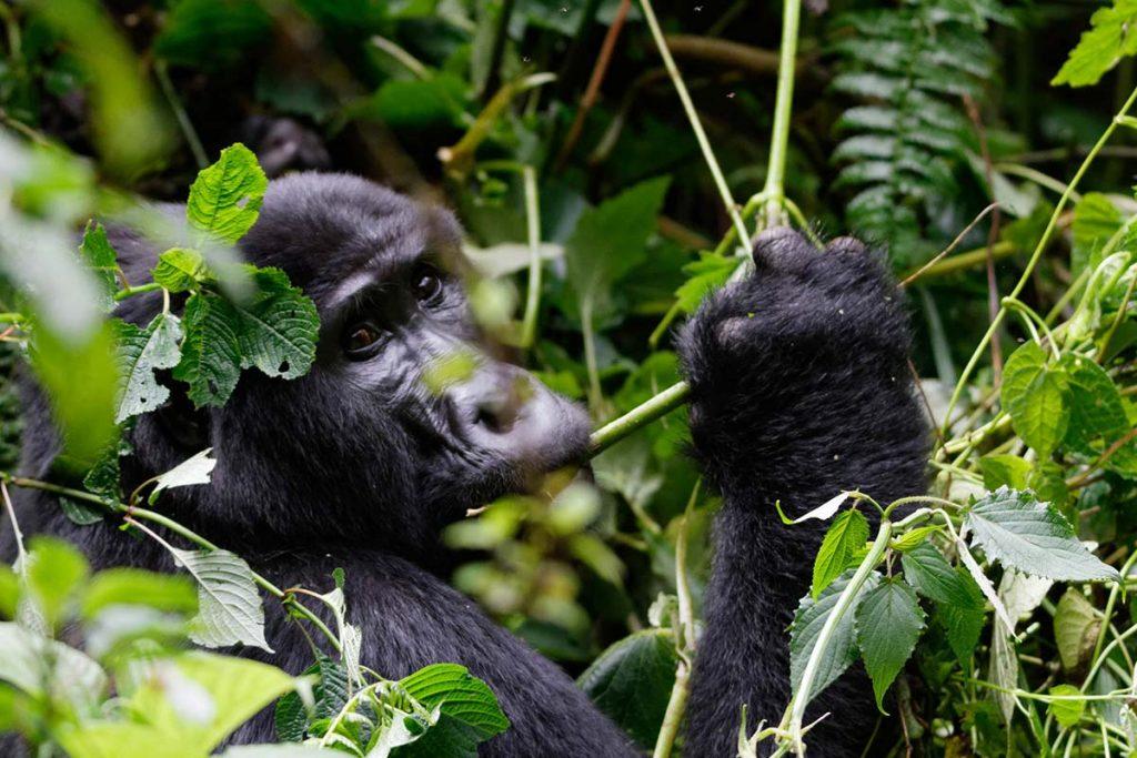 Rwanda Uganda Gorilla Trekking - Road