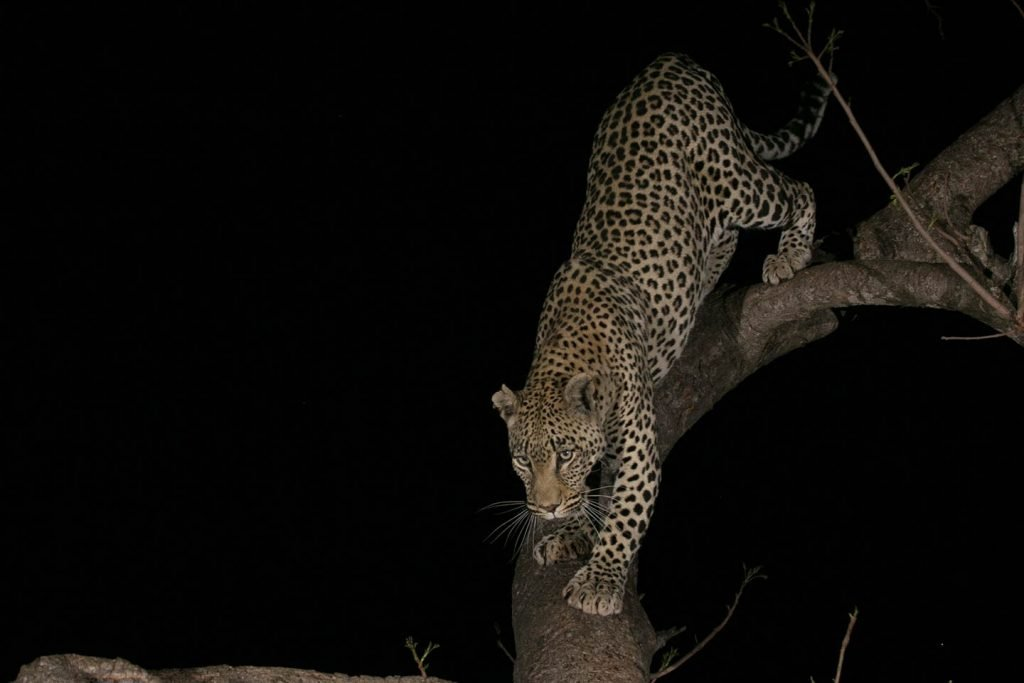 Night Game Drive Safaris in Uganda