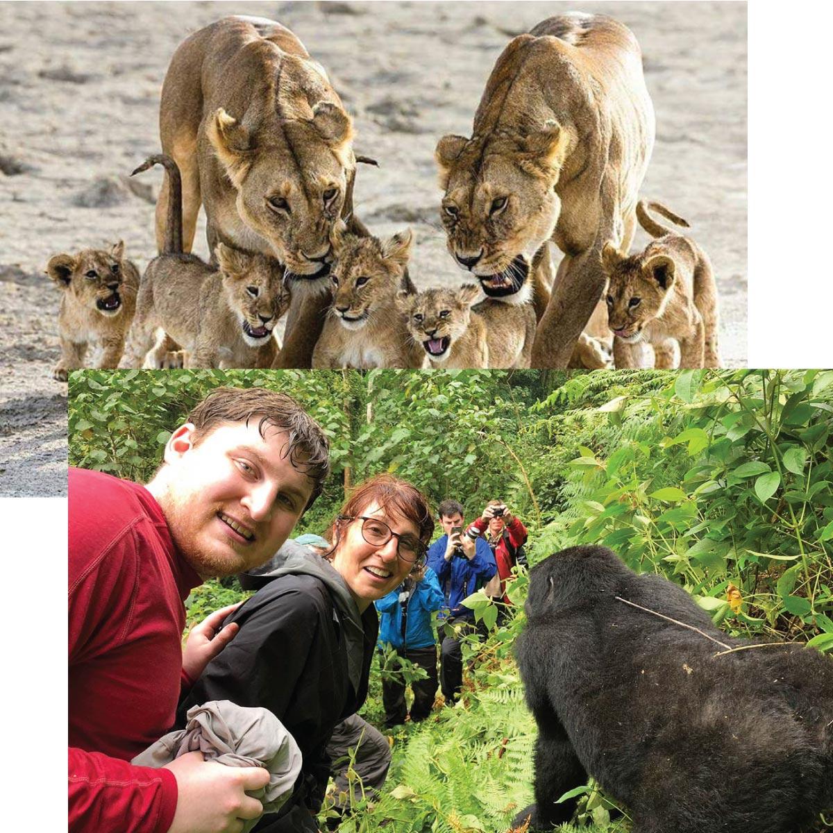 AFrica safari 2019 - AFRICA, THE ULTIMATE ADVENTURE: Savannah Wildlife, Chimpanzee Tracking, And Gorilla Safari